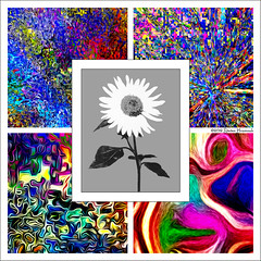 the start - tHe JOUrnEY - THE WONDER - Color Image Studies 1,2,3&5 (GAPHIKER) Tags: bw abstract 1982 graphic sunflower thejourney lithograph salsify hss thestart abstractportrait colorprocessing lithographicfilm happysliderssunday gaphiker myfirstprintinadarkroom