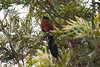 IMG_6978L4 (Sharad Medhavi) Tags: bird canonef100400mmf4556lisusm canoneod50d birdsandbeesoflakeshorehomes