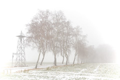 Am Ende des Weges II (O.I.S.) Tags: road schnee trees winter friedhof white snow cold ice graveyard canon eos frost sad bell path sigma schild signpost kalt eis bume trist weg glocke 30d wegweiser traurig 1530 weis strase