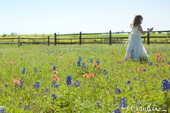 6600 (by claudine) Tags: flowers blue red wild sky orange white green girl fence photography spring paint texas katy dress indian houston brush picket claudine bonnets familyphotographer flickrchallengegroup flickrchallengewinner claudinecom