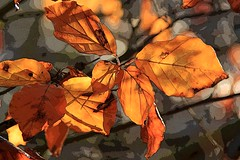Autumn Leaves (Nicola Riley) Tags: november autumn sunlight art backlight canon season artistic seasonal naturallight filter greatphotographer 18200mm beautifulphoto 60d canon60d leavesautumnleaves nicolariley