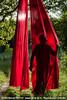 "[Création] Langue des Bois - Cie Huppée / Eguisheim / 13.06.10 • <a style=""font-size:0.8em;"" href=""http://www.flickr.com/photos/30248136@N08/6890997041/"" target=""_blank"">View on Flickr</a>"