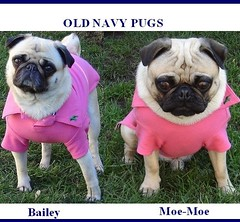 dog pets cute dogs animals shirt puppy costume puppies funny lol humor pug clothes meme pugs oldnavy moemoe dapuglet baileypuggins