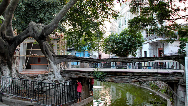 The tree bridge