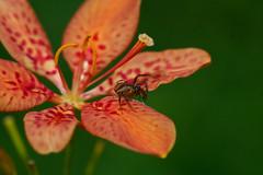 Spider in flower (mcvmjr1971) Tags: city cidade macro ex brasil d50 nikon sigma 150 sp paulo so f28