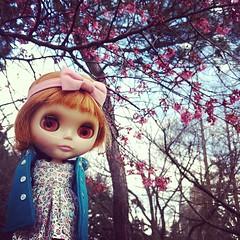 Cherry tree. Creepy cherry eyes. #blythe
