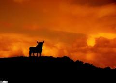 """Confronting the sun"" -  Vejer de La Frontera - Andalucia - Spain (TLMELO) Tags: road travel sunset red mars españa del sunrise spain espanha mediterranean guitar outdoor bull andalucia southern nuvens andalusia toro flamenco marte coluds touro andaluzia ""costa vejerdelafrontera ""southern europe"" sol"" flickrstruereflection1 flickrstruereflection2 flickrstruereflection3"