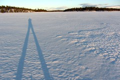 Schatten am Schnee (hikingharry) Tags: winter snow skiing hiking norwegen backpacking backcountry wandern crosscountryski rogen femundsmarka femund bcski schiwandern