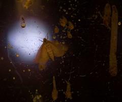 Intruder in the uninhabited camera-beehive at Museum of Natural History -- Wenn Bach Bienen gezüchtet hätte ~ If Bach would have kept Bees -- Kamera Bienenstock Naturhistorisches Museum Wien (hedbavny) Tags: music orange macro nature museum insect licht natur spuren naturalhistory innen bach gelb inside musik makro naturalhistorymuseum insekt beehive baum glas museumofnaturalhistory nhm vitrine intruder naturhistorischesmuseum honig kunstlicht wachs johannsebastianbach youtube exponat bienenstock bienenwachs arvopärt naturhistorischesmuseumwien wienvienna zucht österreichaustria pärt unbewohnt eindringling bienenzucht züchten ausgehöhlt bienenwaben bienennest ausstellungsstück paert honiggelb museumofnaturalhistoryvienna naturhistorischesmuseumderstadtwien arvopaert kamerabienenstock wennbachbienengezüchtethätte