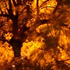 Night Trees 1 (Beeke...) Tags: trees light orange brown nature night gold outoffocus abstractsquare