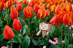 danbo_099 (iskandarbaik) Tags: park uk flowers england cute home bristol toy photography spring colorful colours bokeh outdoor manga cardboard tulip coloring daffodils hyacinth yotsuba danbo danbooru revoltech danboard cardbo danboru