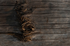 (transient-images) Tags: wood tree waves minimalism natureabstracts