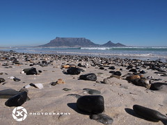 Volcanic Pebbles At Cape Town's Beach (jan-krux photography) Tags: ocean blue sea sky seascape black beach landscape southafrica capetown pebbles volcanic e5 zd southatlantic 1260mm tablemountaintafelbergbeachmilnertonblaauwberg