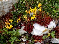 Pequeños detalles (Caty V. mazarias antoranz) Tags: hello flowers españa naturaleza flores nature march spain europa hi greetings monday marzo lunes hola goodday saludos pétalos unióneuropea felicitaciones