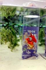 FS1 Aquarium 4/2014