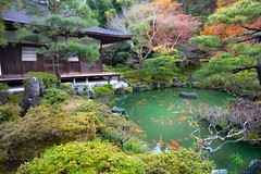 Ginkakuji Temple (Patrick Foto ;)) Tags: park old travel autumn red fish color building tree green heritage fall tourism nature water beautiful beauty yellow japan architecture silver garden season landscape temple japanese tokyo design leaf maple pond kyoto colorful asia view gardening outdoor path buddhist traditional famous religion seasonal peaceful buddhism landmark jp zen koi pavilion butchart ginkakuji kytoshi kytofu