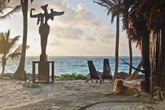 another day in paradise (Juan Ig. Llana) Tags: mxico mar tulum playa palmeras escultura perro amanecer yucatn diamantek rivieramaya cabaas caribe quintanaroo hamacas angeldelbienydelmal