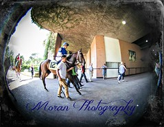 Madame Barbarian (EASY GOER) Tags: park horse sports canon track belmont racing 5d races equine thoroughbreds belmontpark markiii 5dmarkiii