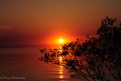 Sunset through the tree EXPLORED - on June 24th 2016 (priyasharma24) Tags: ocean red sea orange sun lake tree water golden pier halo silhoutte