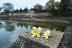 Citadel bokeh (ORIONSM) Tags: flowers water bokeh citadel sony vietnam hue rx100mk3