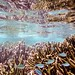 Underwater+near+Jaco+Island%2C+Timor+Leste