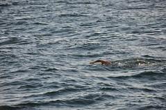 Ponta do Humait - Salvador, Brasil (carolborges) Tags: sun beach swimming salvador pontadohumait