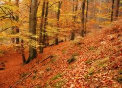 Bosque efecto Orton (la mimi y su cangrejo) Tags: autumn belgium belgique nikond50 bosque otoo foret bois efectoorton chateudelahulpe otonne pikaple mimiysucangrejo