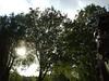 Breaking (tezzer57) Tags: trees sky sun london clouds southlondon lambeth imperialwarmuseum londonist