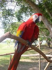 Pícara guacamaya (Caneckman) Tags: parque naturaleza animales tabasco villahermosa vegetacion yumka