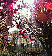 Twickenham riverside (Andy Blackwell Photography) Tags: uk pink light england london nature beautiful beauty pretty riverside meditation middlesex tw landcape twickenham simplybeautiful eelpie eelpieisland middx