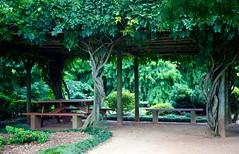 A shady spot (Deb Jones1) Tags: park travel trees green beauty canon garden botanical flora australia places vista flickrduel debjones1
