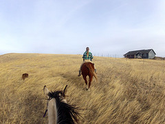 (kristi_Nikon_D1X) Tags: horse dog field southdakota outdoors country wideangle cowgirl goprocamera goproherohd2