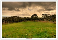 Adelaide After The Rain (Damon | Photography) Tags: travel trees cloud tree green nature rain clouds forest photography nikon natural sigma australia 11 adelaide after mm raining 1020 damon the sigma1020mm travelphotography d90 nikond90 ausse