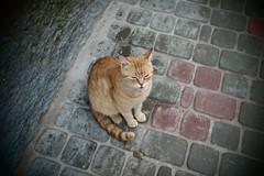 (drawingyourattention) Tags: africa orange pen cat olympus marocco pancake 20mm essaouira pinholefilter panasonic20mmf17 epl2