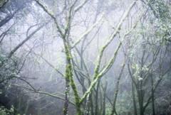 (nicolemariedev) Tags: trees mist nature rain fog forest moss hike softfocus mountmadonna