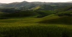Green peace (Robyn Hooz) Tags: verde green canon landscape eos wheat tuscany land toscana colori luce paesaggio colline grano verdi campi colli ef1740l 550d