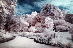 Napier Botanical Gardens (McSnowHammer) Tags: new trees gardens ir botanical zealand software infrared nik napier