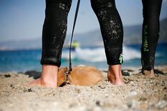 Zzz... (AndreaScim) Tags: italy dog kite love beach cane italia mare sleep sicily kitesurf sonno spiaggia sicilia messina stretto