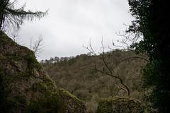 Dovedale Ridge