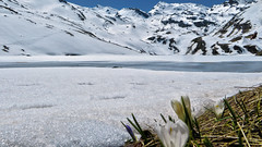 Lac du Lou - Savoie - France (Felina Photography - in NL, preparing for Austria) Tags: trip schnee wallpaper mountain lake snow france alps tourism ice nature montagne poster landscape snowshoe lago photography see frozen frankreich meer fotografie photographer tour hiking sneeuw natuur lac natura hike adventure neve snowshoeing neige ausflug frankrijk alpen fotografia savoie gita excursions paysage turismo alpi francia valthorens montagna paesaggio hotspot excursion tourismus landschap fotografo  fotografa uitje ijs ghiaccio felina  excursie rhnealps racchette  toerisme escursione  ghiacciato tocht escursioni turismus lacdulou felinaphotography felinafoto