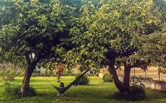 256/365 Tininess (darioseventy) Tags: baby plant tree verde green grass outdoor natura erba tiny hammock swinging albero pianta amaca allaperto dondolare