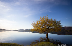 Perfect shadow (Clear Of Conflict) Tags: sunset naturaleza sun sunlight lake seascape reflection tree sol nature water de landscape lago atardecer agua sundown dusk pantano alava gamboa reflejos trigo ullibarri nanclares