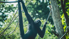 Vie de Singe - VI (ThibaultPoriel) Tags: wild blur france nature forest landscape zoo freedom monkey wildlife bretagne olympus monkeys vivitar morbihan parc singe singes pontscorff