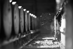 Endlager (memories-in-motion) Tags: old light shadow white black danger canon eos mono dangerous rust time bokeh alt barrels web 85mm disposal grill cobweb final depot rost weiss schwarz zeit netz dumping gefhrlich f12 fsser entsorgung spinnenetz ef85mmf12liiusm endlager 5dmarkiii