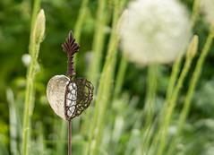 Heart within flowers (Eklis273) Tags: white green nature garden heart natur grn garten herz weis