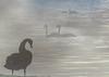 160604 cbMN 160604 © Théthi ( 5 pics ) (thethi: pls read the 1st comment :-)) Tags: eau rivière fleuve cygne brouillard juin meuse namur wallonie belgique belgium setvosfavorites bestof2016 ruby20 ruby22 setwater setnamurcity faves128 setjuin setwings