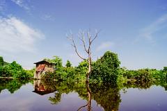 Loneliness Duo (picaedo) Tags: sky tree miri sarawak malaysia sonyalpha a550 alpha550 sonya550