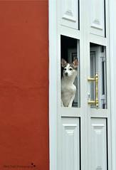 waiting (MiChaH) Tags: holiday vakantie spring spain village streetlife lapalma lente spanje dorp 2016 tazacorte canarischeeilanden canarianislands islabonita