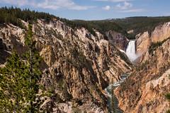 Grand Canyon of the Yellowstone (AnitaBurke1) Tags: vacation june nikon rust scenic canyon waterfalls yellowstonenationalpark geology rhyolite lowerfalls yellowstoneriver yellowstonefalls 2016 vshapedvalley oxidizing anitaburke