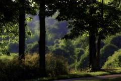 Evening Light at Glenwood IMG_1355_HDR_edit (ForestPath) Tags: park ohio usa cincinnati hss nearhome glenwoodgardens sliderssundaygroup ispentmanyhourswalkingherewhenitwasourneighborsfarmwheniwasateenagersoiknoweverysquarefootoftheplace theeveninglightwasntreallythisdarkishbuttheslidingyouknow